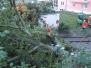 Einsatz: Person unter Baum eingeklemmt